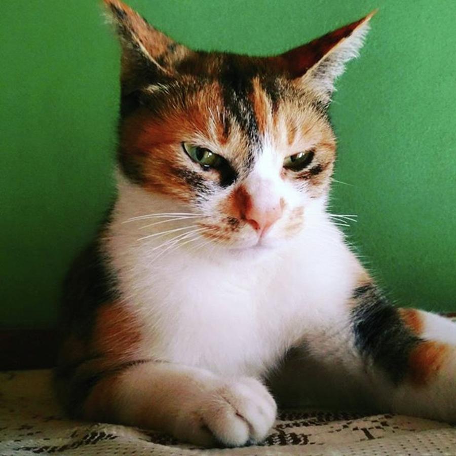 Cat Photograph - 良い写真撮れなかった… #cat by Masamichi Takano