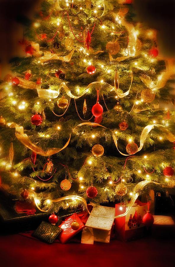 Christmas Tree Photograph by Mal Bray