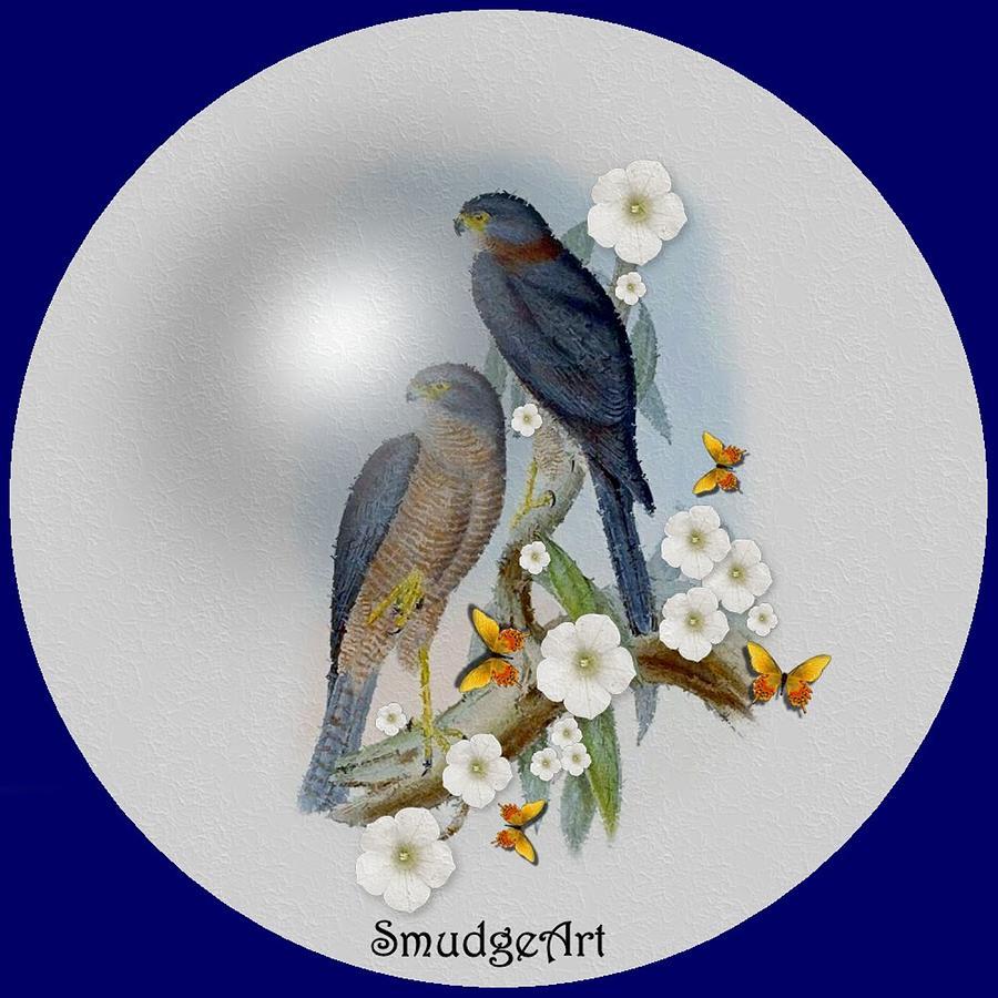 #0394 Collared Sparrow Hawk Digital Art -  Collared Sparrow Hawk by Madeline  Allen - SmudgeArt