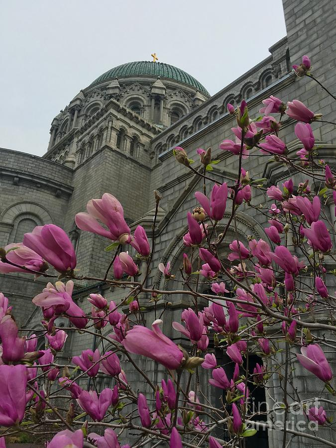 Colorful spring at the cathedral  by Debbie Fenelon