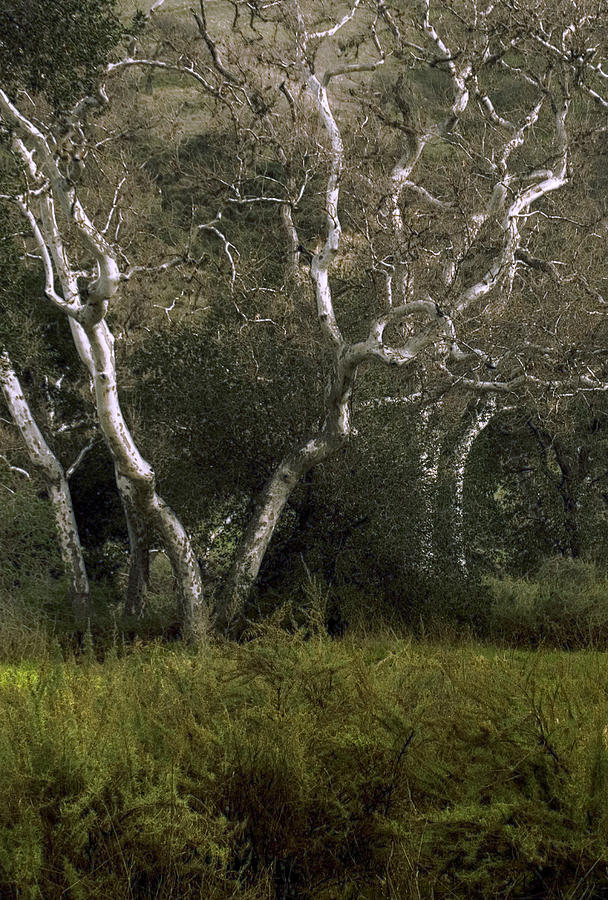 Tree Photograph -  Dv Creek Trees by Karen  W Meyer