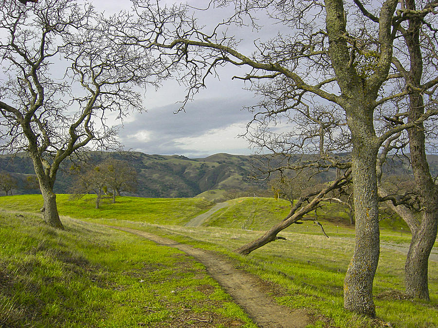 Landscape Photograph -  East Ridge Trail Spring by Karen  W Meyer