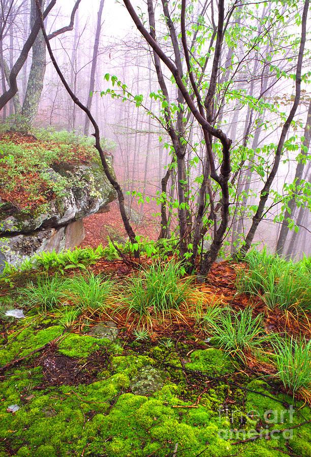 Spring Photograph -  Foggy Spring Morning by Thomas R Fletcher