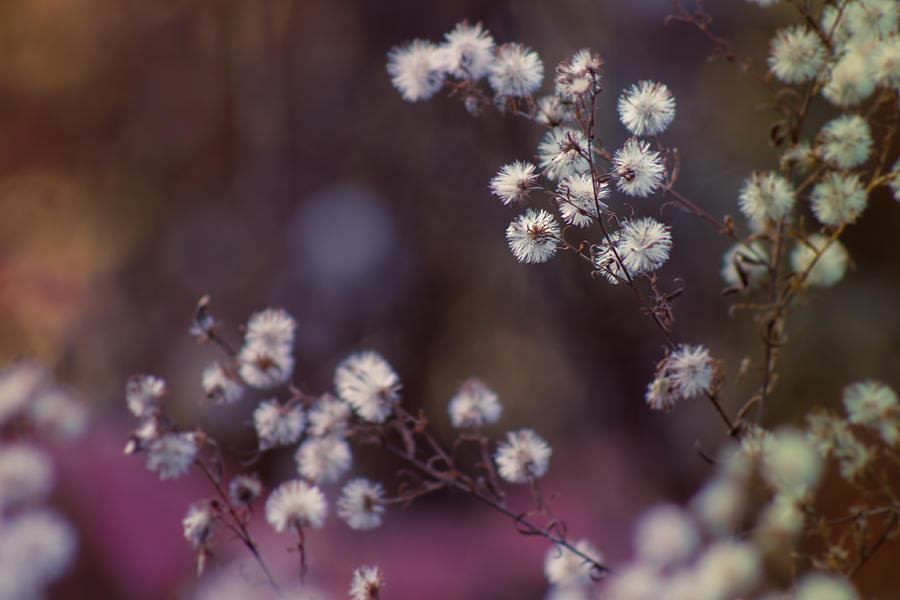 Fuzzy Fall  Photograph by Bulik Elena