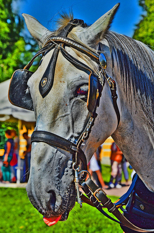 Horse Photograph -  Horse Language. by Andy Za
