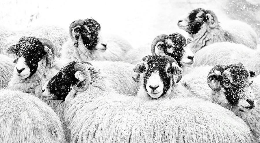 Swaledale Photograph -  In Winters Grip by Janet Burdon