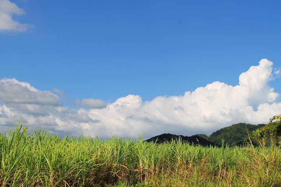Jamaican Landscape 2 by Debbie Levene
