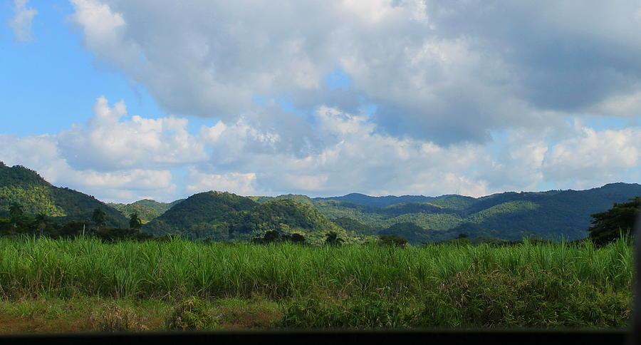 Jamaican Landscape by Debbie Levene