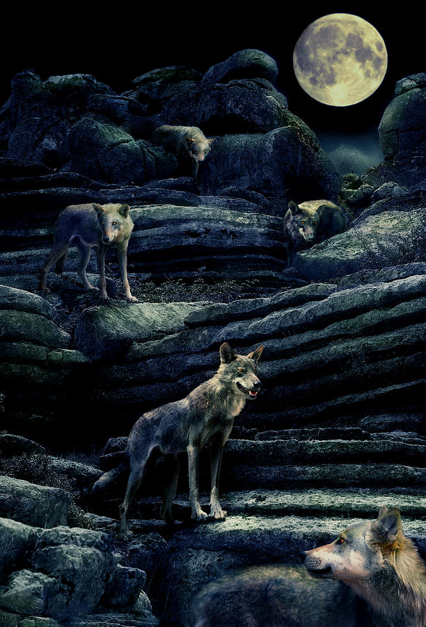 Wolf Photograph -  Moonlit Wolf Pack by Mal Bray
