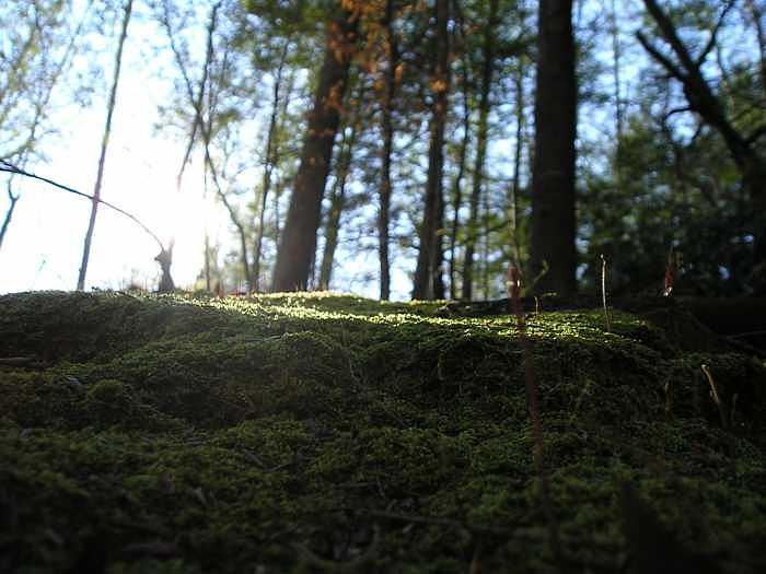 Moss  Sugarland Trail Great Smoky Mountains Photograph by Amanda Hendricks