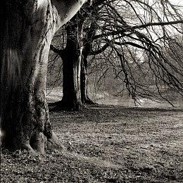 Nature Photograph -  Old Trees by Antonie Woordes