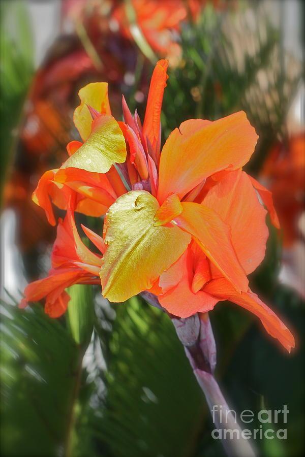 Floral Photograph -  Orange Bright by Maureen J Haldeman