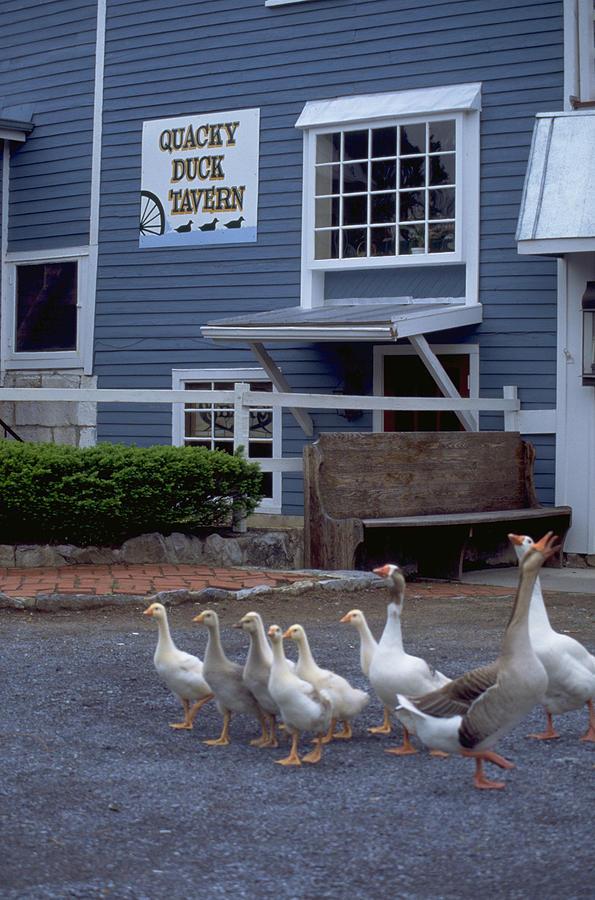 Quacky Duck Tavern Photograph