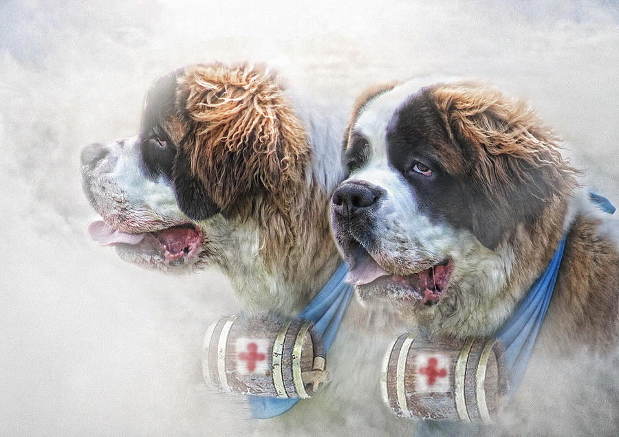 St Bernard Digital Art -  Saviours In The Snow by Trudi Simmonds