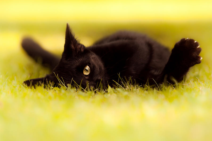 Cat Photograph -  See You  by Bulik Elena