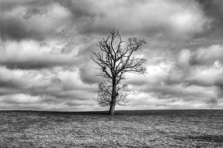 Single Tree Photograph -  Single Tree by Dave Godden