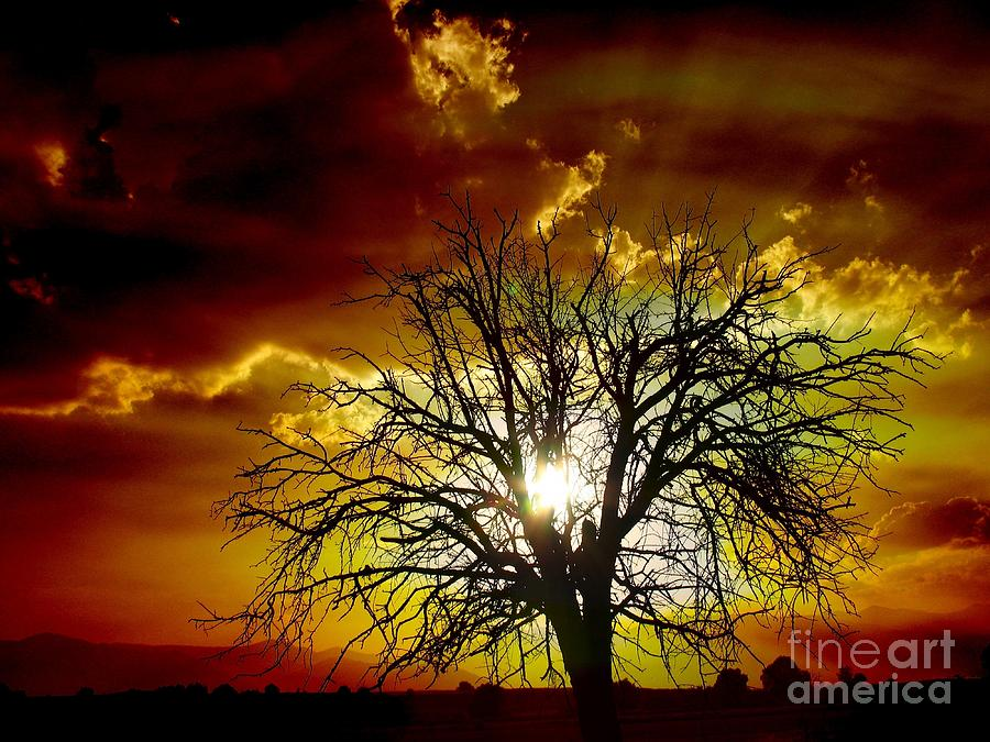 Tags Photograph -  Sunset Tree   by Vassilis Tagoudis