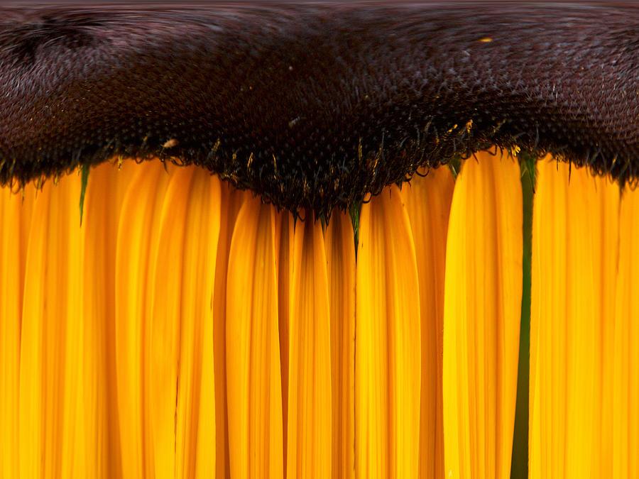Nokia Photograph -  The Curtains by Jouko Lehto