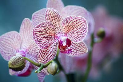 Orchid Photograph -  Turquoise Orchid by Deborah  DeAmroim