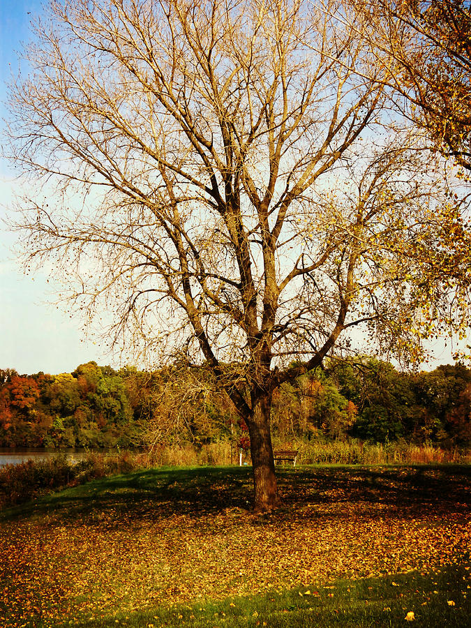 Nature Photograph -  Wisdom Tree by Kyle West