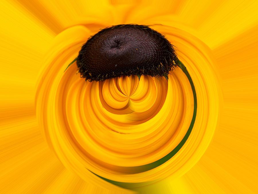 Jouko Lehto Photograph -  Yellow by Jouko Lehto