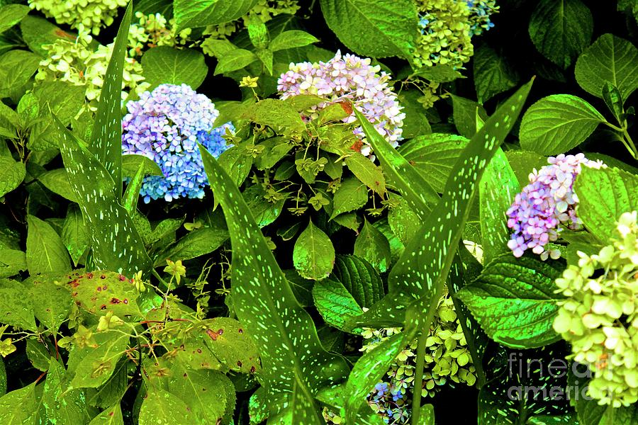 Plant Photograph - 01142017069 by Debbie L Foreman