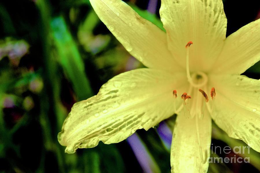Atlanta Botanical Gardens Photograph - 01142017078 by Debbie L Foreman