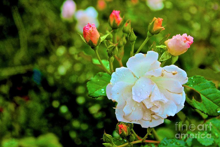 Atlanta Botanical Gardens Photograph - 01142017080 by Debbie L Foreman