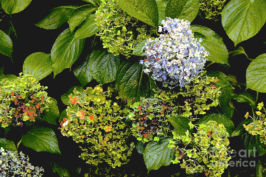 Atlanta Botanical Gardens Photograph - 01142017082 by Debbie L Foreman