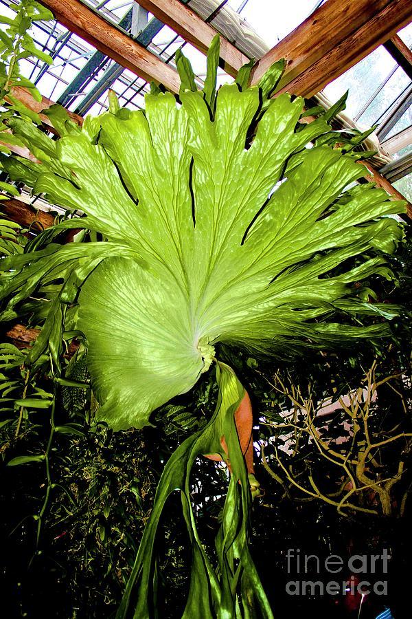 Atlanta Botanical Gardens Photograph - 01142017092 by Debbie L Foreman