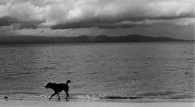 Dog Photograph - 021500-32 by Josh Wertheimer