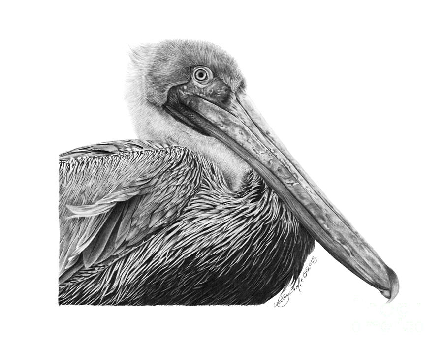 047 - Sinbad the Pelican by Abbey Noelle