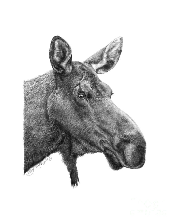 048 - Shelly the Moose by Abbey Noelle