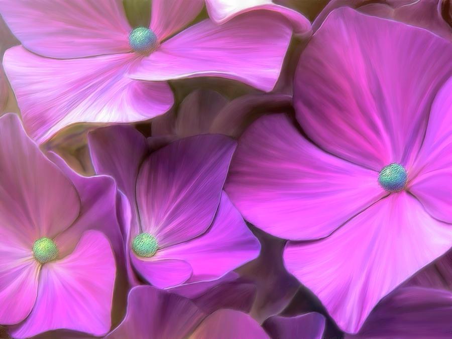 Hydrangea Florets by Bill Johnson