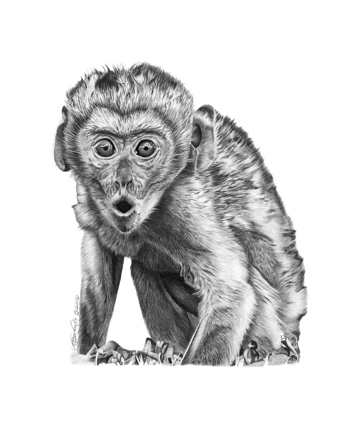057 Madhula the Monkey by Abbey Noelle