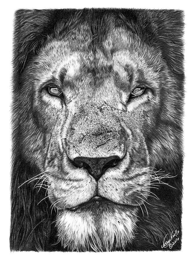 059 - Lorien the Lion by Abbey Noelle