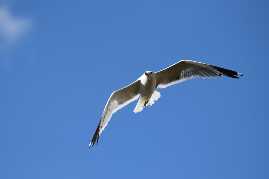 Seagull Photograph - Seagull Burgess Res by Margarethe Binkley