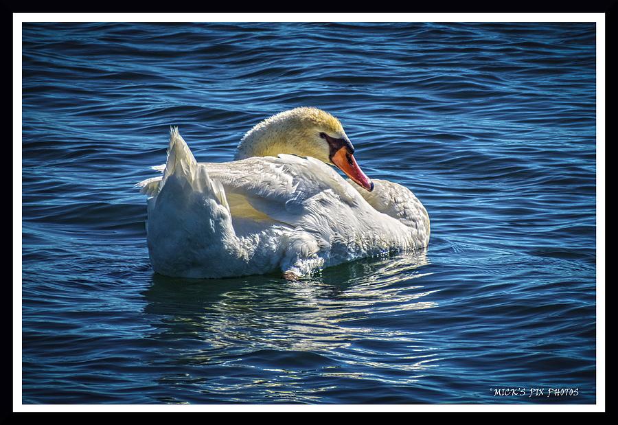 Bird Photograph - 071118-50-c by Mike Davis