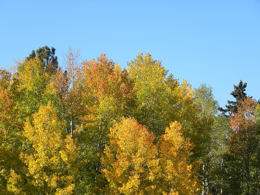 Trees Photograph - Fall In Divide Co by Margarethe Binkley
