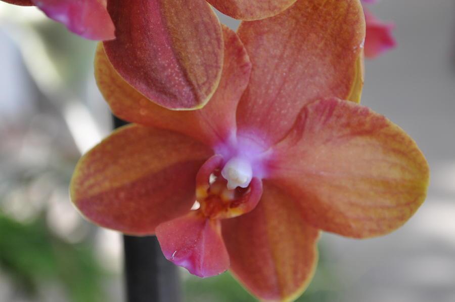 Flowers Photograph - 26 by Sfinga Sfinga