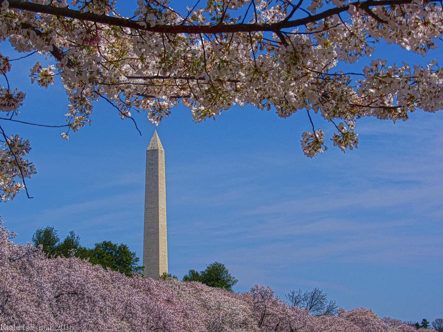 Relight Photograph - A Capital Cherry Blossom I by Kathi Isserman