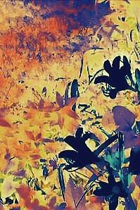 A Floral Garden Photograph