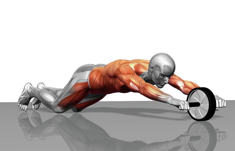 Horizontal Photograph - Ab Wheel Exercise by MedicalRF.com