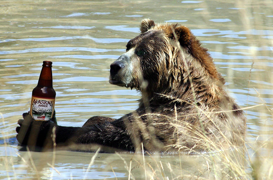 Grizzly Bear Photograph - Alaskan Amber by Wildcat Photography