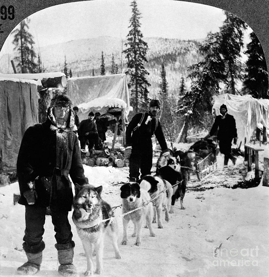 1900 Photograph - Alaskan Dog Sled, C1900 by Granger