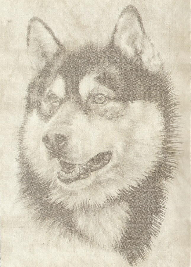 Malamute Mixed Media - Alaskan Malamute And Pup by Barbara Keith