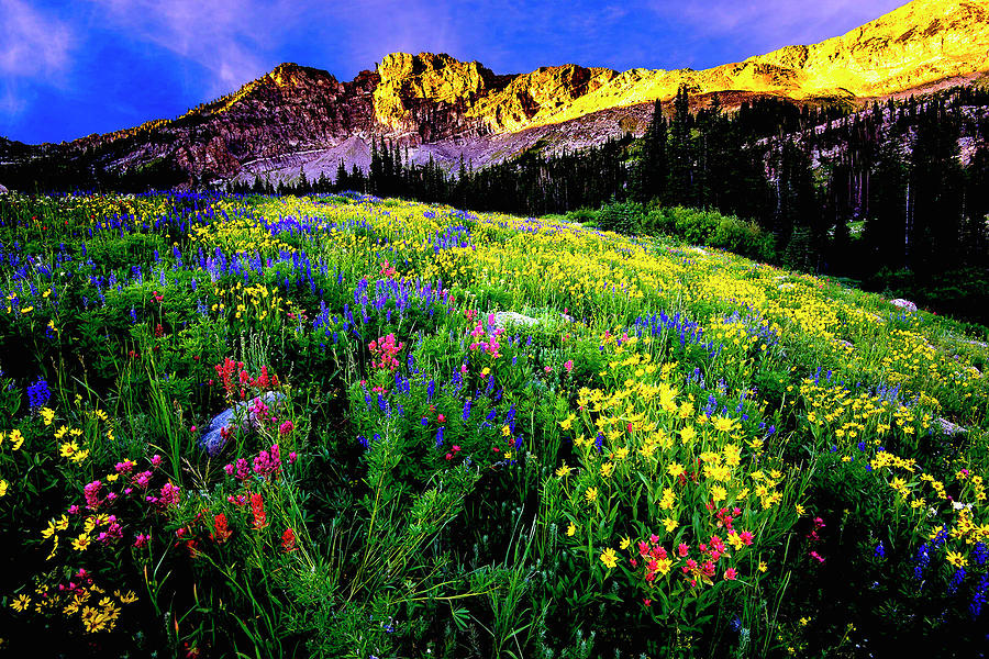 Albion Basin Photograph - Albion Basin by Norman Hall