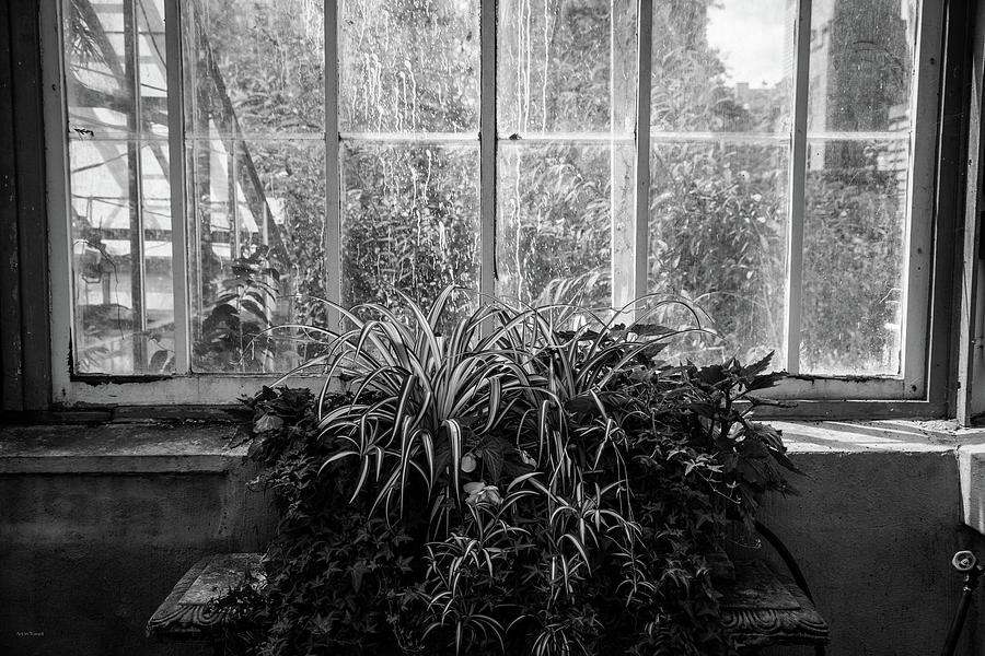 Allan Photograph - Allan Gardens by Ross Henton