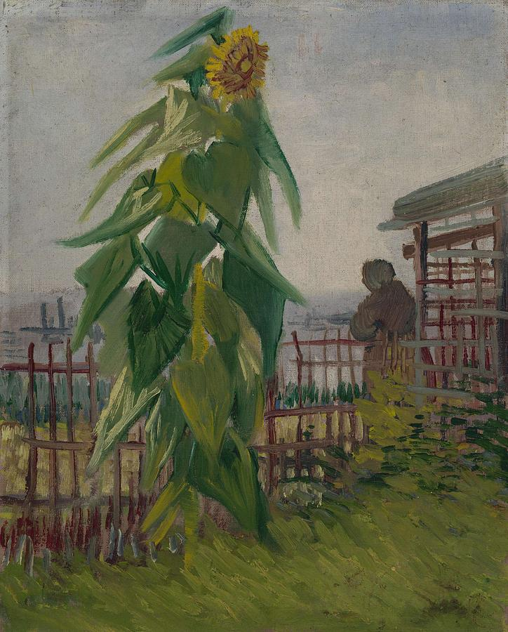 Nature Painting - Allotment With Sunflower Paris, July 1887 Vincent Van Gogh 1853 - 1890 by Artistic Panda