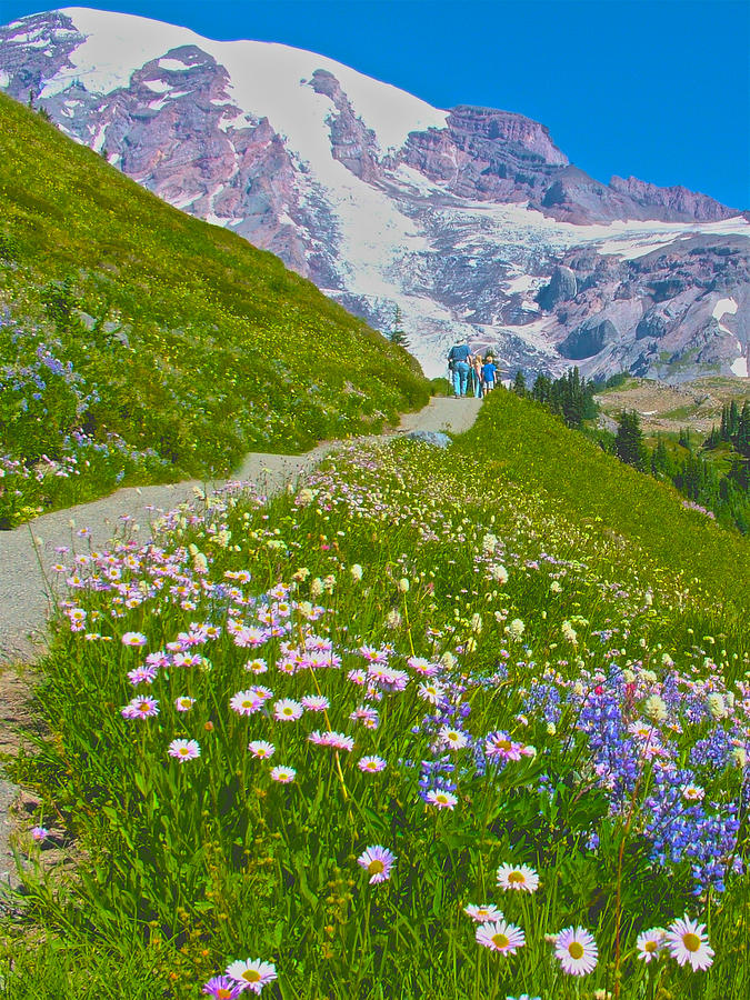 Washington Photograph - Alta Vista Trail In  Mount Rainier National Park, Washington  by Ruth Hager